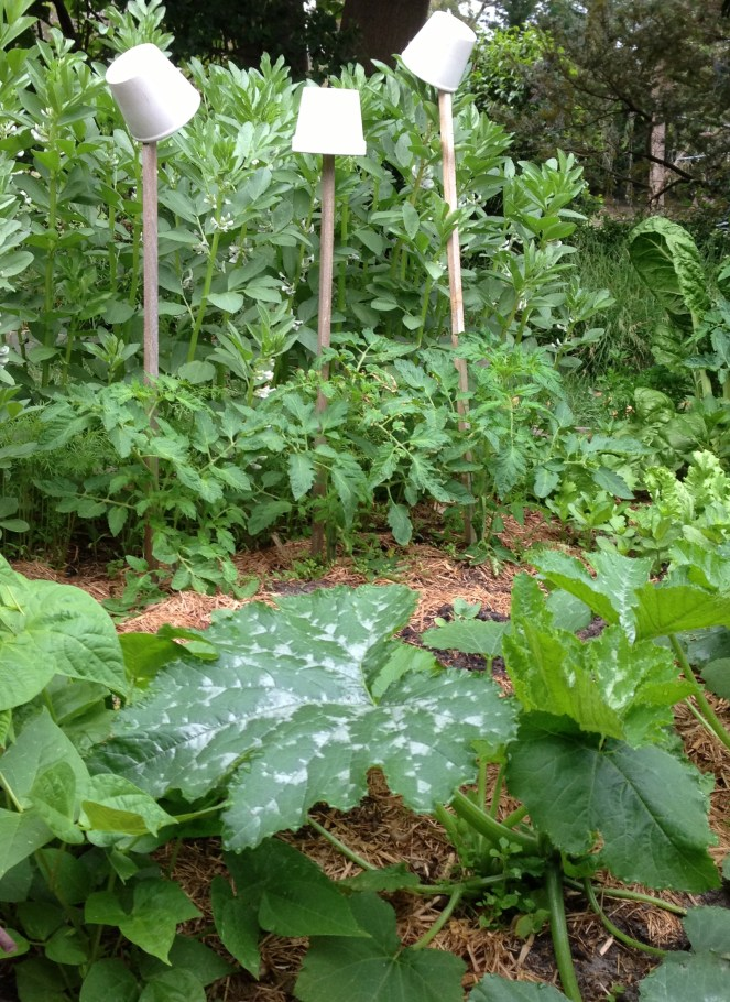 vegetable garden plot