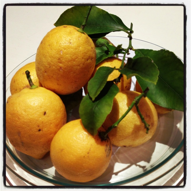 Backyard lemons